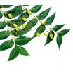 Nimbamedžių aliejus
