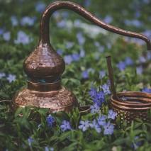 Stovykla: Botaninė kosmetika, žoliavimas ir aromaterapija